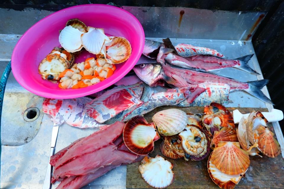 Kahawai and scallops